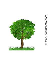 groen boom