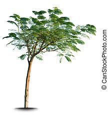 groen boom, vrijstaand