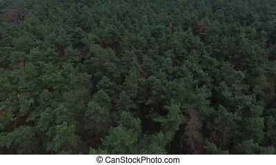 groen bos, luchtopnames, hoogste mening