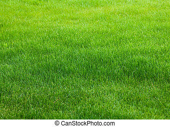 groen gras, achtergrond