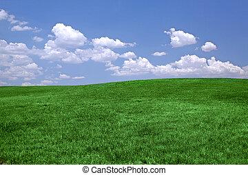 groen gras, en blauw, hemel
