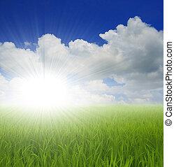 groen gras, en, hemel