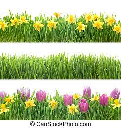 groen gras, en, lentebloemen