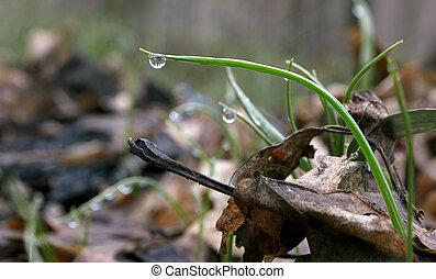 groen gras, en, waterdaling, onee, groot, op, plant