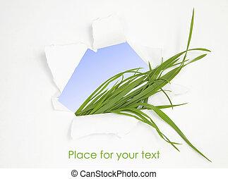 groen gras, in, abstract, venster., lente, achtergrond