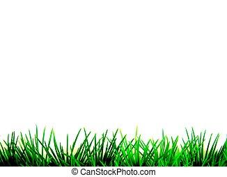groen gras, vrijstaand