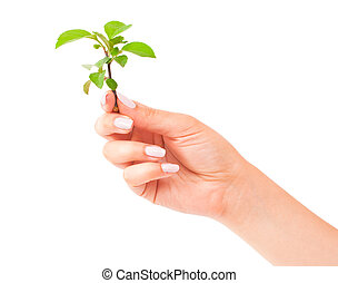 groen plant, in de hand
