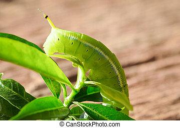groen rups, op, groen blad, hout, achtergrond