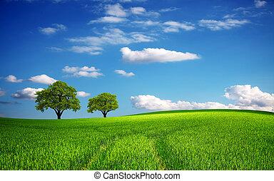 groen veld, in, lente