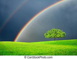 groen veld, met, boompje, en, dubbel, regenboog
