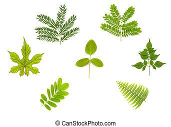groen wit, set, blad, vrijstaand