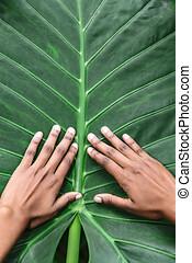 groene, afrikaans-amerikaan, blad, handen, vrijstaand, vrouwlijk
