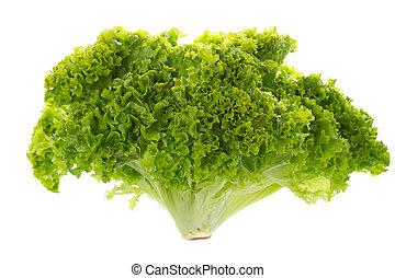 groene, batavia lettuce