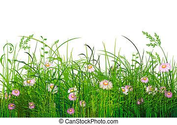 groene, bloemen, gras