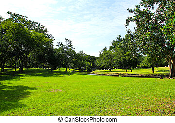 groene bomen, in park