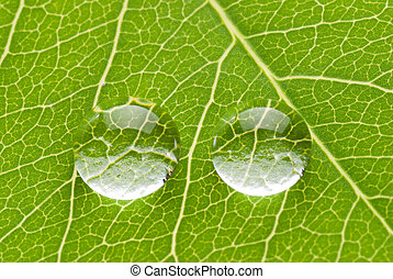 groene, druppels, blad, twee, transparant