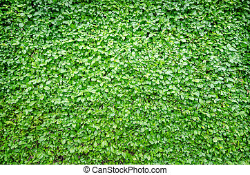groene, fris, blad, achtergrond, natuur