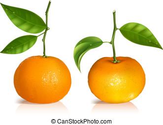 groene, fris, mandarijn, leaves., vruchten