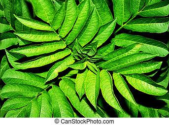 groene gebladerte