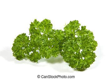 groene, helder, sprig, peterselie, curly-leaf