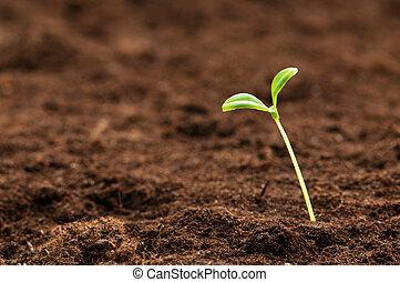 groene, kiemplant, illustreren, concept, van, nieuw leven