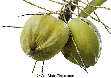 groene kokosnoot, blad