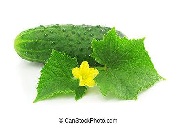 groene, komkommer, groente, fruit, met, vellen, vrijstaand