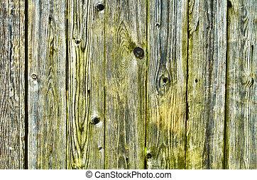 groene, met, vochtig, houten hek