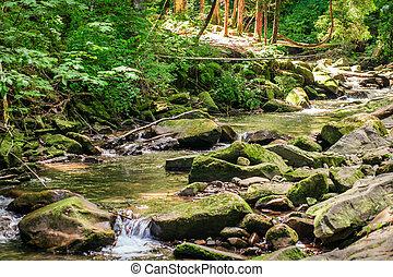 groene, mos, op, rotsen, dichtbij, een, stroom
