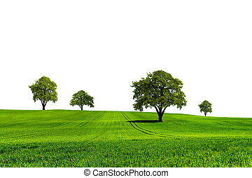 groene, natuur, ecologie