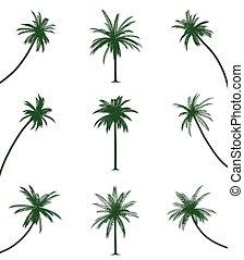 groene, palmbomen