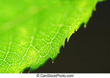 groene, rand, blad