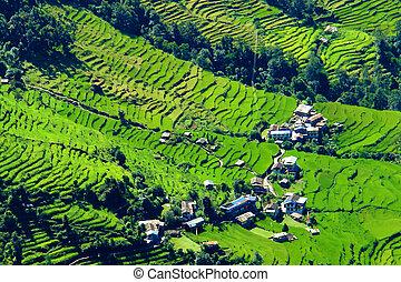 groene rijst, velden, en, berg, rivier landschap, trek, om...
