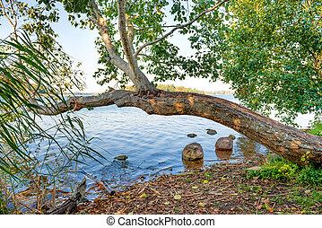 groene rivier, boompje, bank