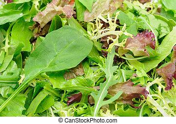groene salade, closeup
