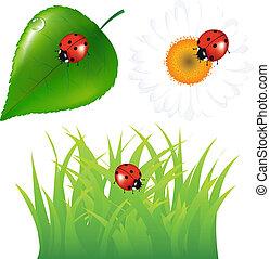 groene, set, met, lieveheersbeest