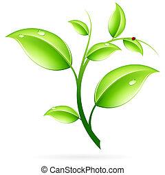 groene, spruit