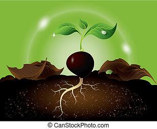 groene, spruit, groeiende, van, zaad