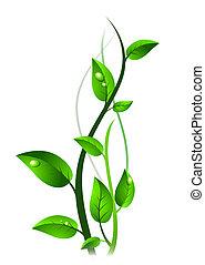 groene, spruit, met, druppels, op, bladeren