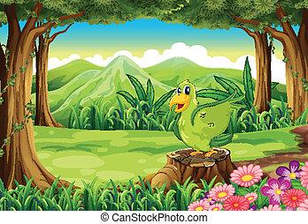 groene, stomp, vogel, boven, bos