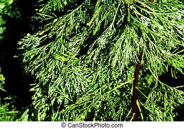 groene, treen