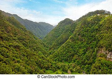 groene, tropisch bos, vallei