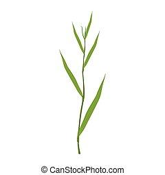 groene, vector, gras, zegge, illustratie