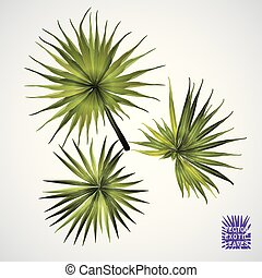 groene, vector, palm, leaf.