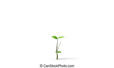 groene, vellen, boompje, groeiende, hd, alfa