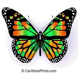 groene, vlinder, geïsoleerde kleur