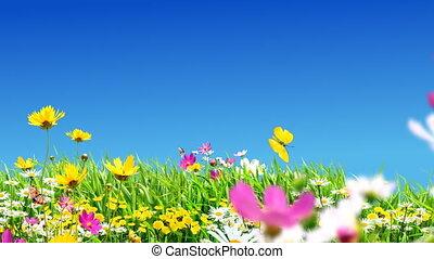 groene, weiden, en, bloemen