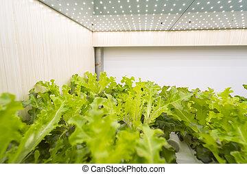 groente, binnen, geleide, hydroponic, organisch, licht, boerderij, groeien, technologie, landbouw