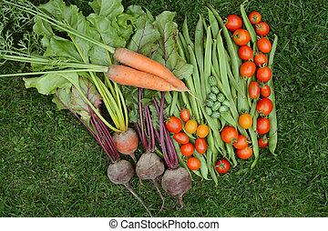 groente, fris, selectie, de opbrengst van de tuin