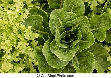 groente, groene, graden